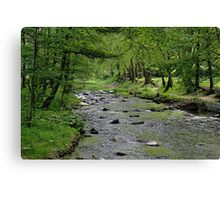 Art in the Forest Canvas Print