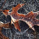 First Ice by Lynn Wiles