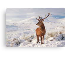 Deer Stag in the snow Canvas Print