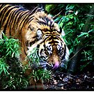 Big Cat by Kevin Meldrum