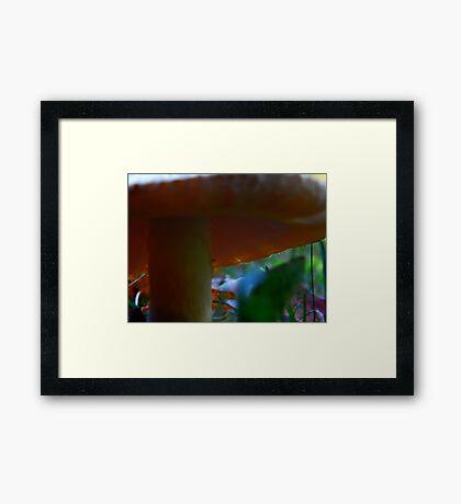 Mushroom Kingdom (1009) Framed Print
