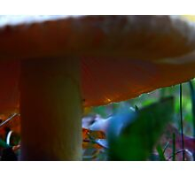 Mushroom Kingdom (1009) Photographic Print