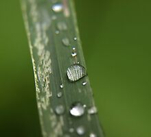 Raindrops by wgf309