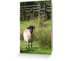 Yorkshire Sheep Greeting Card