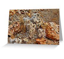 Native Cactus Palomino Valley Greeting Card