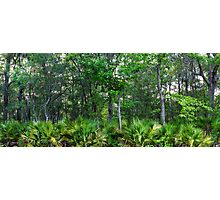 Maritime Forest Panorama Photographic Print