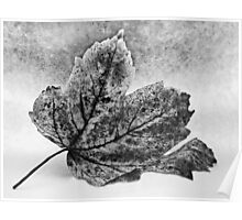 Decaying Leaf Poster