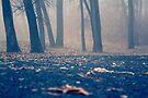 Foggy Morning by sandra arduini