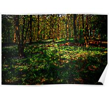 Sun Dappled Wood Poster