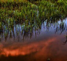 Tideland Reflection by jimcrotty