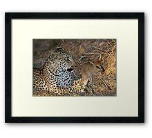 Leopard/duiker interaction 5 Framed Print