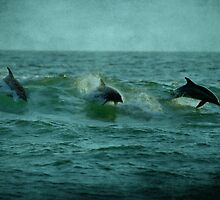 Dolphins by Sandy Keeton