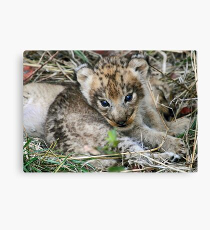 What a face! Canvas Print