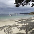 Coningham beach - tree shadows  by gaylene