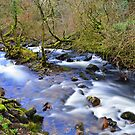 Dartmoor: The River Taw in Belstone Cleave by Rob Parsons