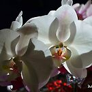 Orchids in the Shadows by Mattie Bryant