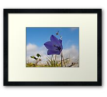 Wildflowers. The Burren County Clare Ireland Framed Print