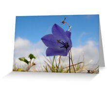 Wildflowers. The Burren County Clare Ireland Greeting Card