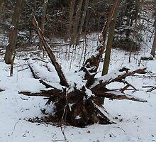 Ardagh Bluffs in Winter by Jeanette Muhr