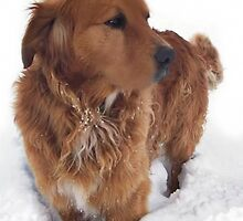 ? ? ? ? I LOVE THE SNOW COME ON OVER ? ? ? ?  by ✿✿ Bonita ✿✿ ђєℓℓσ