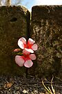 Small and simple flower by Jemma Richards