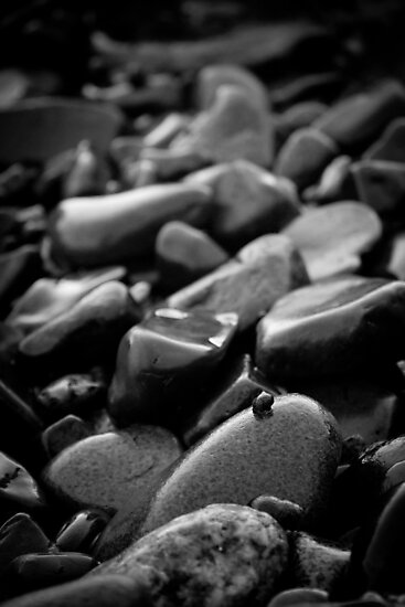 Pebbles and Snail by jphphotography