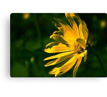 Yellow Flower (Halifax Gardens) Canvas Print