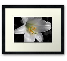 Lily & Yellow Stamen (Mendel) Framed Print