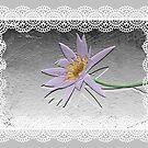 Lavender and Lace by Rosalie Scanlon
