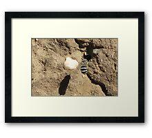 White-banded Digger Bee Framed Print
