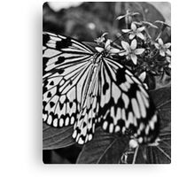 B&W Butterfly Canvas Print
