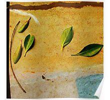 Leaf Portrait #15 Poster