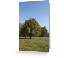 Autumn at Moorenbrunnfeld, Nuremberg Greeting Card