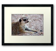 Mr. Meerkat Framed Print