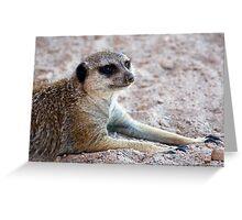 Mr. Meerkat Greeting Card
