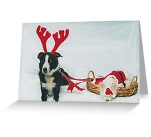 Merry Christmas from Santa Paws Greeting Card