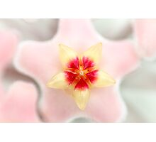 Small Pink Flower - macro natural light Photographic Print