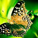 My wings... by Kornrawiee