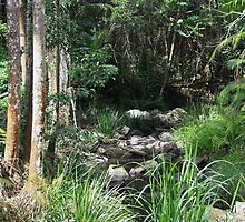 hogans rainforest ... by gail woodbury