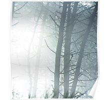 Sunburst through the trees Poster