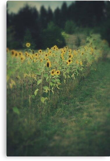 Sunflower Garden by maxygreat