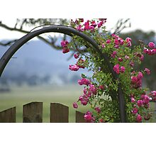 Rose Arch Photographic Print