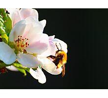Laidback Bee Photographic Print