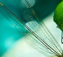 Dragonfly by Sebastian Sayegh
