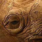 Eye of a Rhino by Epicurian