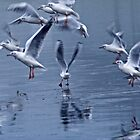 Seagulls on Ice by Epicurian