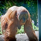 Orangutan by Bailey Designs