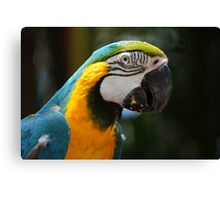 Blue coloured macaw Canvas Print