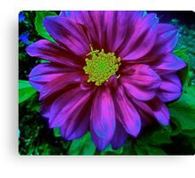 Soul Blossoms Canvas Print