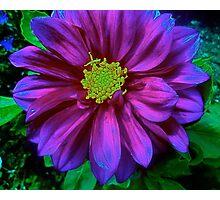 Soul Blossoms Photographic Print